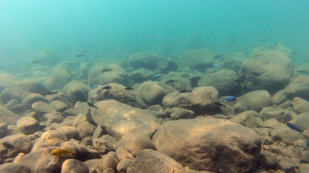 lake-malawi-fishes-1024x576.thumb.jpg.8c4c19fbadf3801b4cd4f74b5067d5b7.jpg